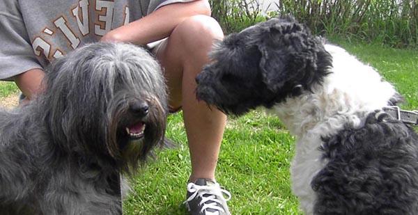 Puppies from heaven Celebrity och Flashline's Flashback