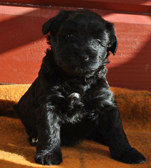 Puppies from heaven Heartbreaker